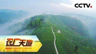 《农广天地》 20190729 一甜遮百丑 高山茶飘香| CCTV农业