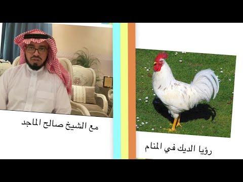رؤيا الديك في المنام الشيخ صالح الماجد Youtube