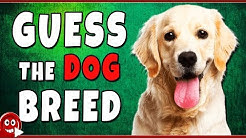 Can You Guess The Dog Breed | Animal Quiz