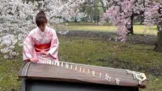 さくら(Sakura) 25絃箏 (25 strings koto)