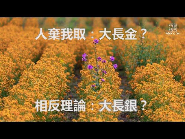201124 九哥晚報:人棄我取:大長金?  相反理論:大長銀?