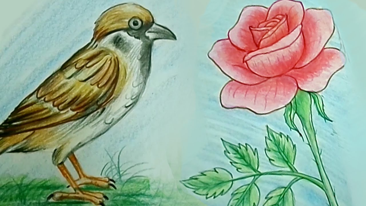 How to draw rose flower tweet bird step by step kids drawing tutorial easy drawing w pencil