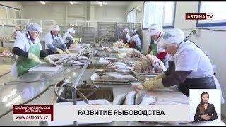 В Кызылординской области стартовал процесс зарыбления Малого Арала