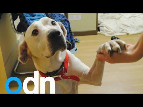 The homeless dog who loves holding hands