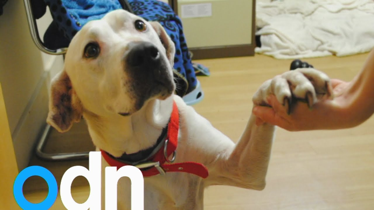 The homeless dog who loves holding hands