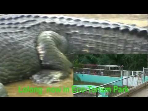 Lolong The Worlds Largest Crocodile In Captivity YouTube - Meet worlds largest crocodile caught philippines