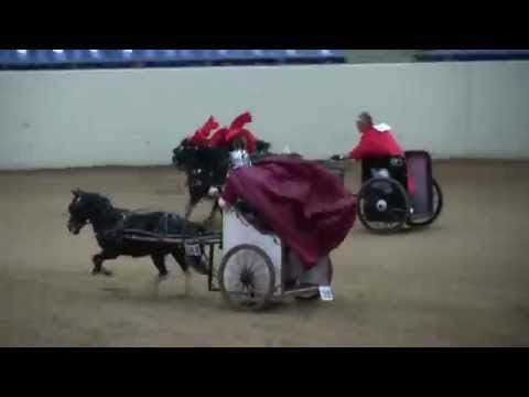 2015 AMHR Nationals: Chariot racing!!!