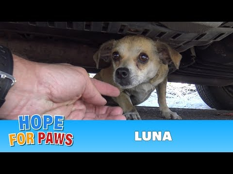Thumbnail: How a little microchip changed this dog's life!!! Please share this important video.