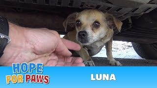 How a little microchip changed this dog's life!!!  Please share this important video. thumbnail