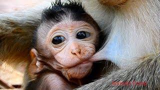 Very adorable newborn monkey, Very big newborn monkey, This adorable newborn grow up so fast