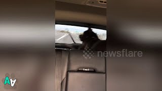 Hilarious Dog Chases Windshield Wiper