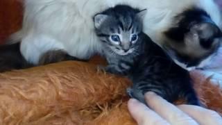 Маленький котёнок, новый питомец