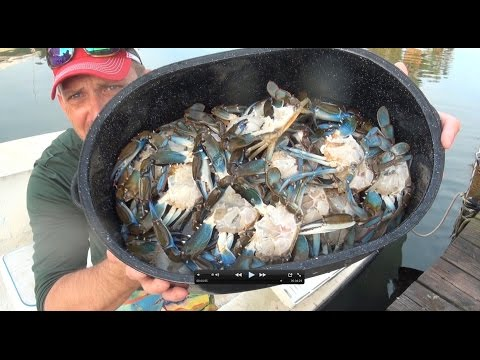killing and cleaning live crabs. humanely!!! thumbnail