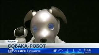 Sony возобновляет производство собак-роботов Aibo