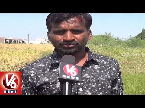 Kamareddy District Farmers In Concern With Damaged Crops | V6 News