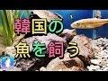 韓国の淡水魚を飼育してみました! の動画、YouTube動画。