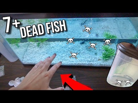 ALL OF MY FISH ARE DYING!!