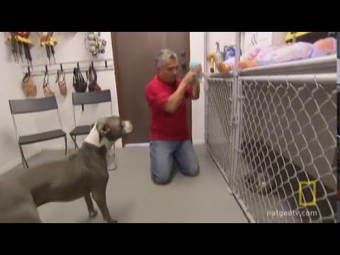 Training an Aggressive Dog