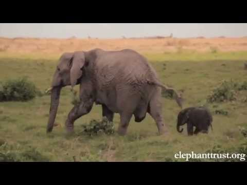 Thumbnail: Elephant Baby-Mother love will make U cry