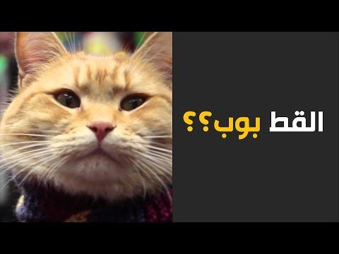 القط بوب قصة قط متشرد أنقذ حياة شاب متشرد وحولها الى مسار مغاير