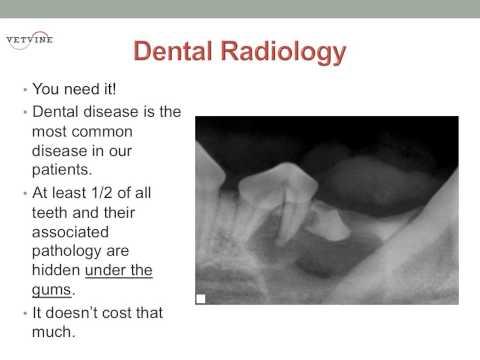 Dental Radiology In Veterinary Practice