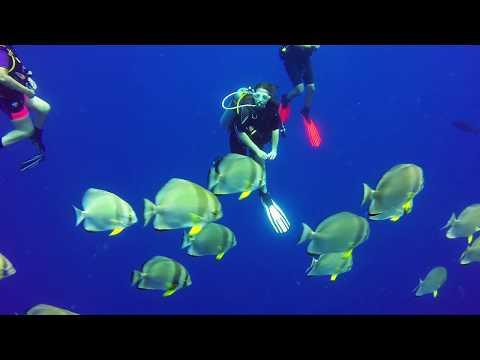 Red Sea Diving June 2018