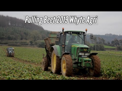 Pulling Beet 2019-Whyte Agri