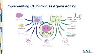 The crispr-cas9 system demonstrates unparalleled genome editing efficiency in a broad range of species and cell types, but it suffers from concerns related t...