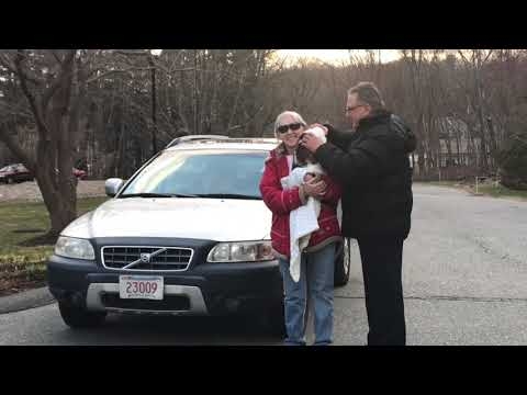 Westwood Family Chiropractic - Pet Adjusting