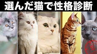 【心理テスト】慎重派?積極的?選んだ猫で当たる本当の性格とは!?あなたの性格がわかる性格診断