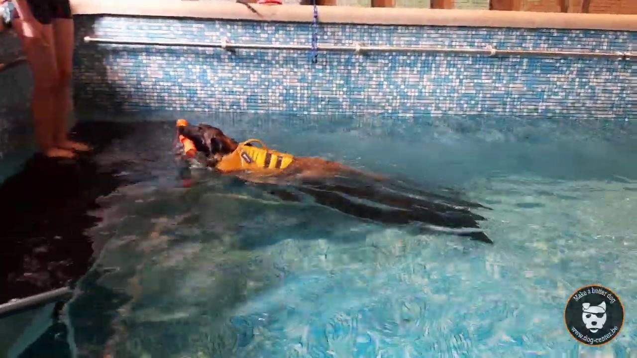 Dog Pool : première nage pour Ty !