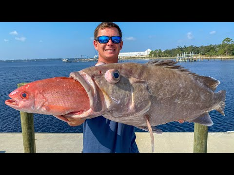 HUNGRY Deep Sea Grouper! Catch Clean Cook- Snowy Grouper (Deep Drop Panama City, Florida)