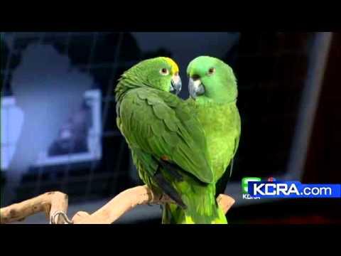 Bird Adoption Fair