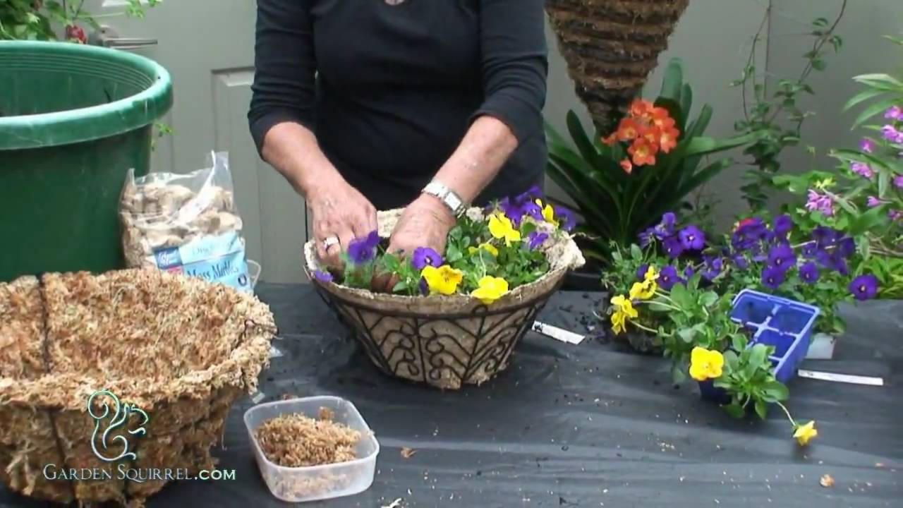 Youtube Hanging Flower Baskets : Hanging baskets easy pansy