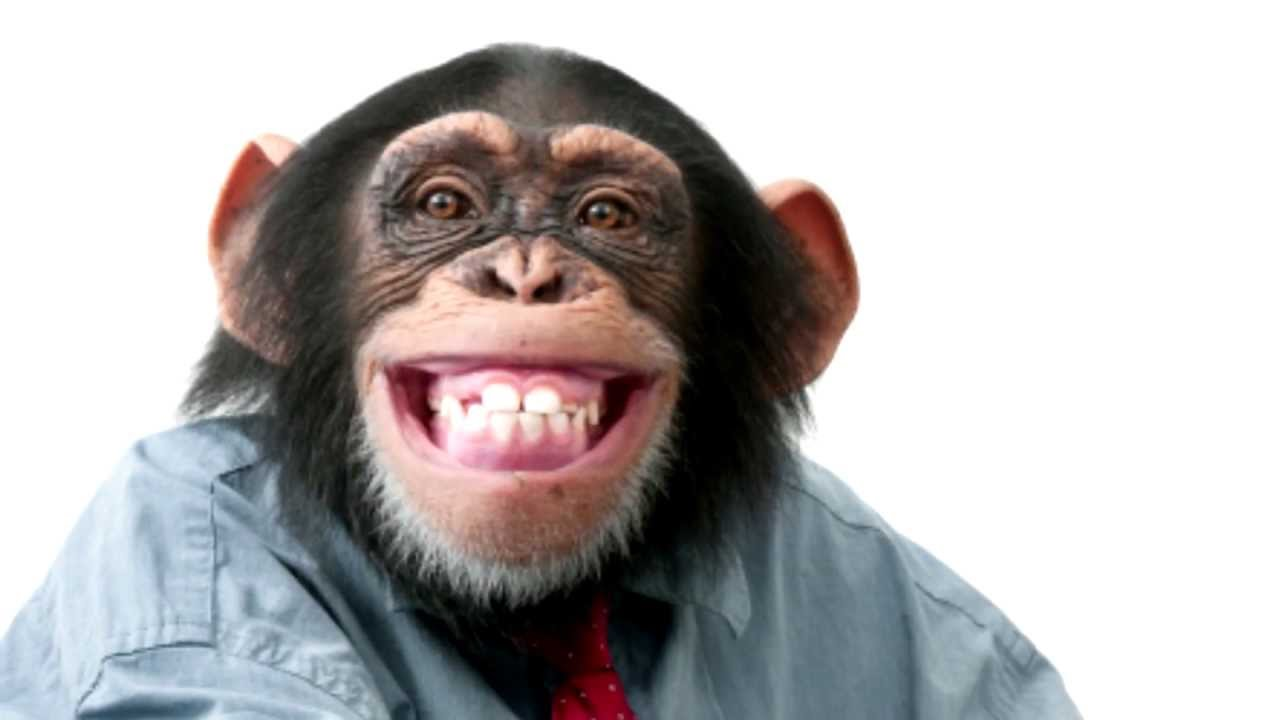 Monkey Madness -- could monkeys ever type out Shakespeare? by CMIcreationstation
