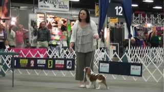 Kentuckiana Cluster Dog Shows - Cavalier King Charles Spaniels - Best In Breed Judging