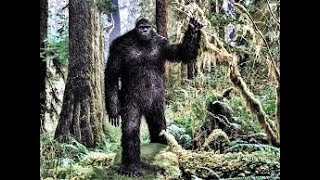 Cryptid Sightings  New discoveries may lead to sasquatch's existence and proof Aug 2018
