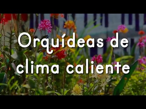 Orquídeas De Clima Caliente