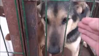 Приют для животных в Рязани Зверополис классное место для доброго дела