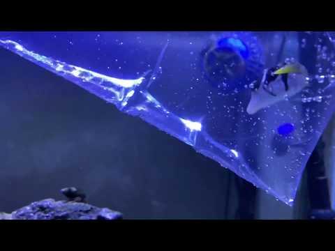 Puffer Fish Intro To Aquarium