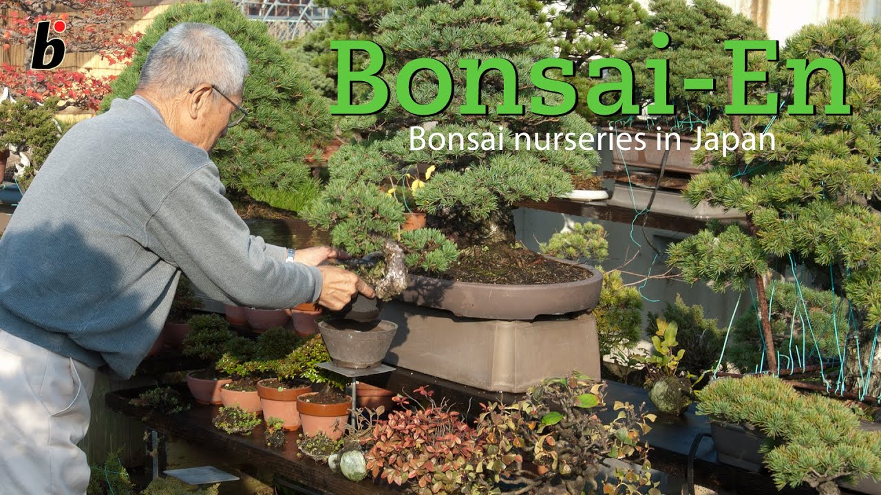 Anese Bonsai Nursery