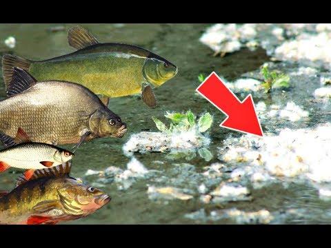 Рыба не будет клевать если на воде лежит это!! Причины по которым рыба не клюёт!