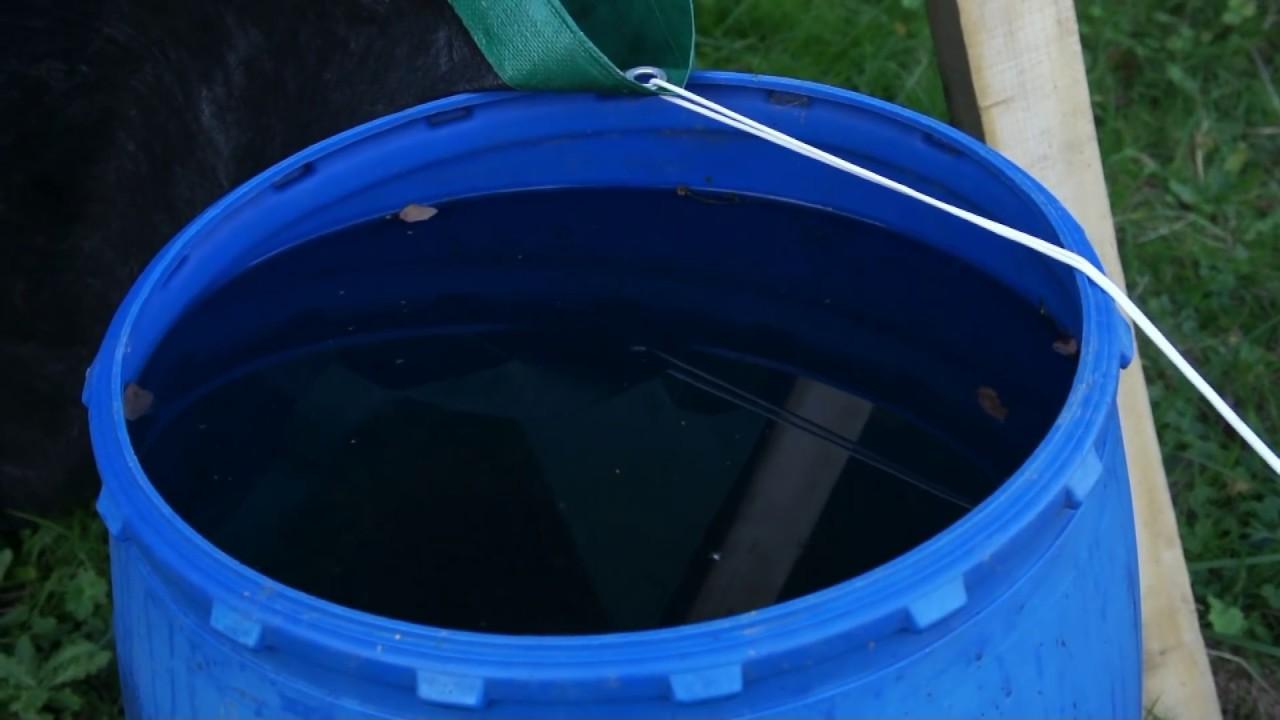 gros rat r cup rateur d 39 eau de pluie youtube