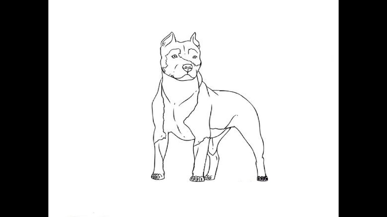 Uncategorized How To Draw Pitbull how to draw a pit bull youtube d