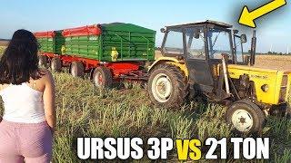 URSUS 3P  VS  21 TON ☆Transport Rzepaku Na Skup!  ☆Żniwa 2019