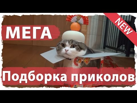 ПОДБОРКИ ПРИКОЛОВ 2015 - YouTube