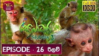 Sobadhara - Sri Lanka Wildlife Documentary | 2019-09-20 | ( රිලව් - Toque macaque ) Rilaw