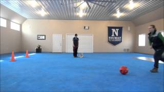 Archie (wire Fox Terrier) Boot Camp Trained Dog Video Minneapolis