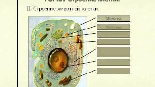 Строение клетки.AVI