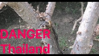 Тайланд ОПАСНОСТИ проживания в ДОМЕ Thailand DANGER